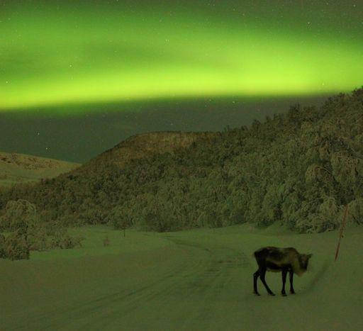 reindeer_strip.jpg